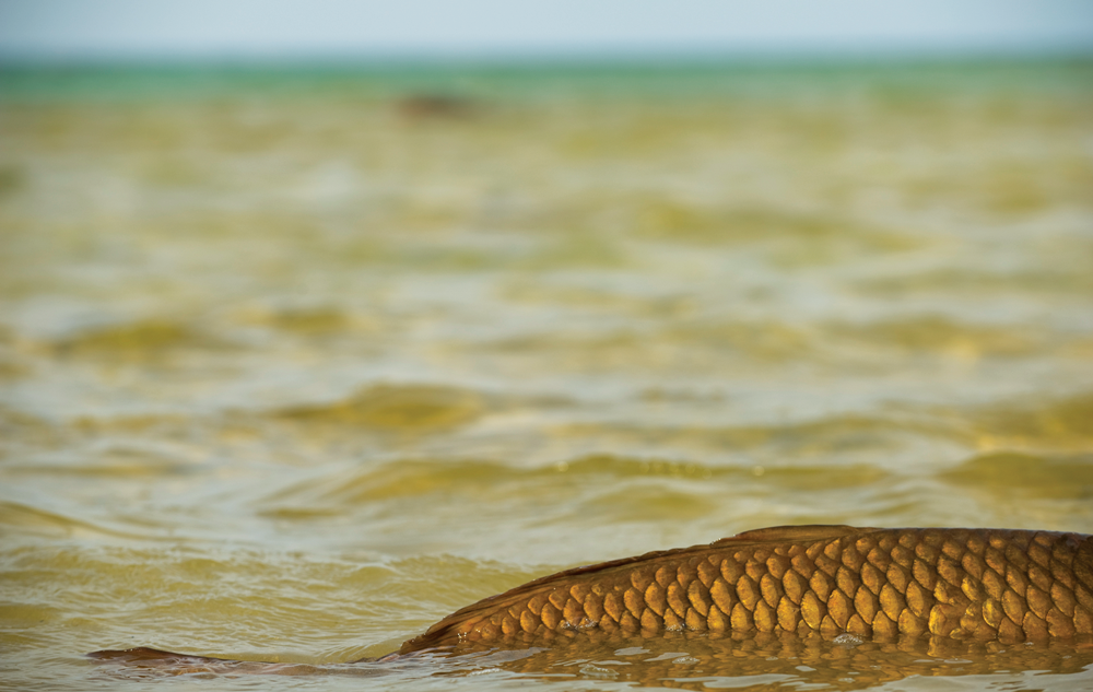 Fish showing off scales while swimming by
