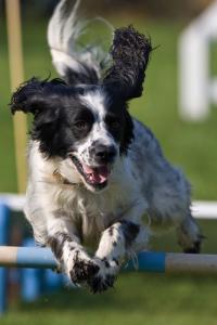 iStock Dog Jumping