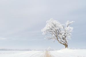 Winter Blues shot in Coopersville