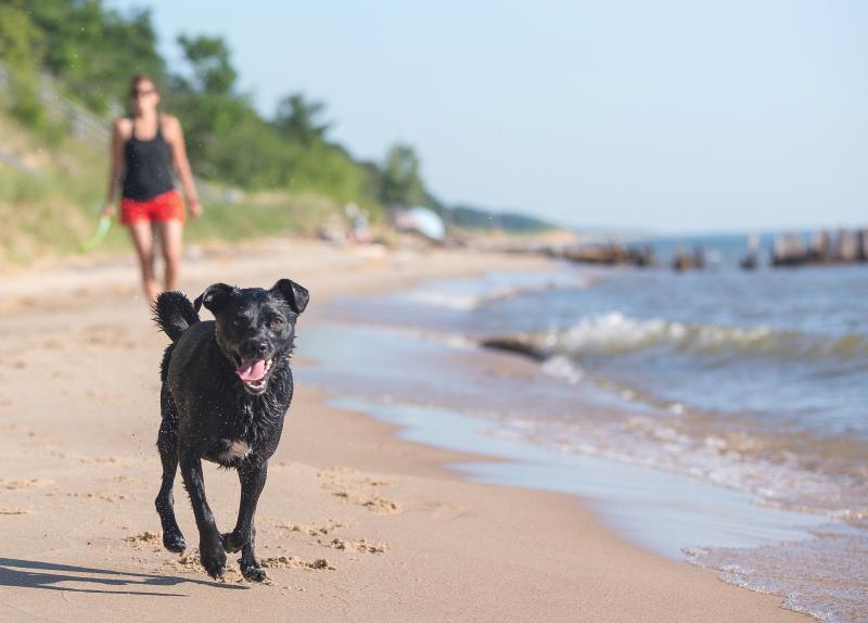Dog running down beach