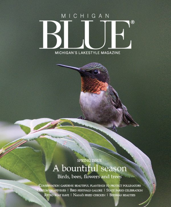 Blue Gift Sub Cover