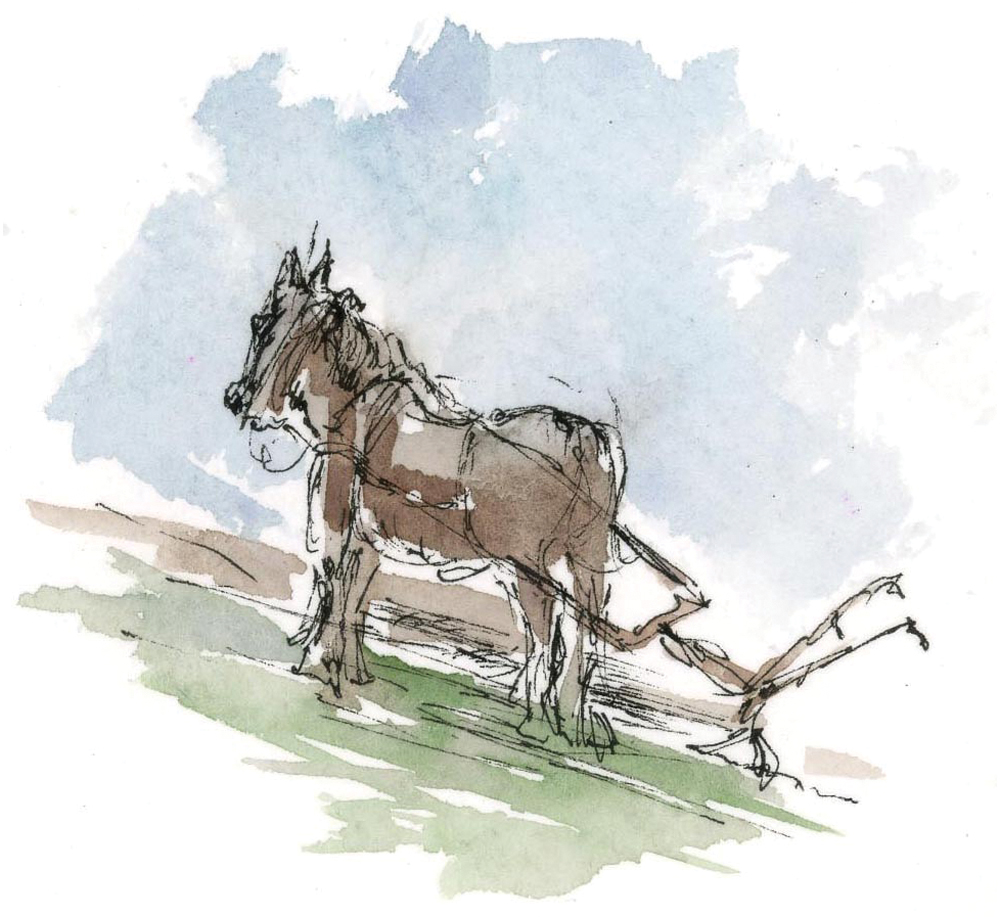 Family Tides Illustration Horse