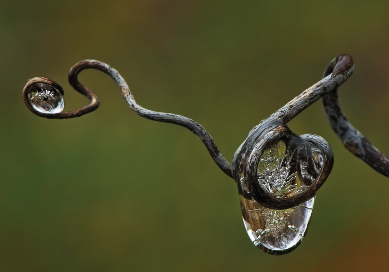 """Frozen Raindrop in Vine III"""
