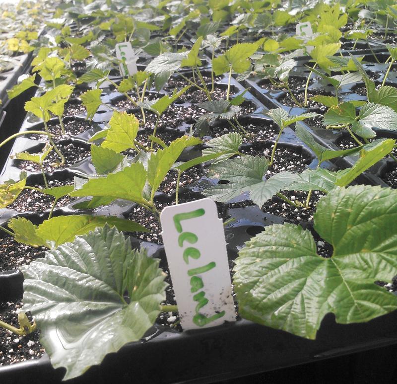 New Mission Organics leeland
