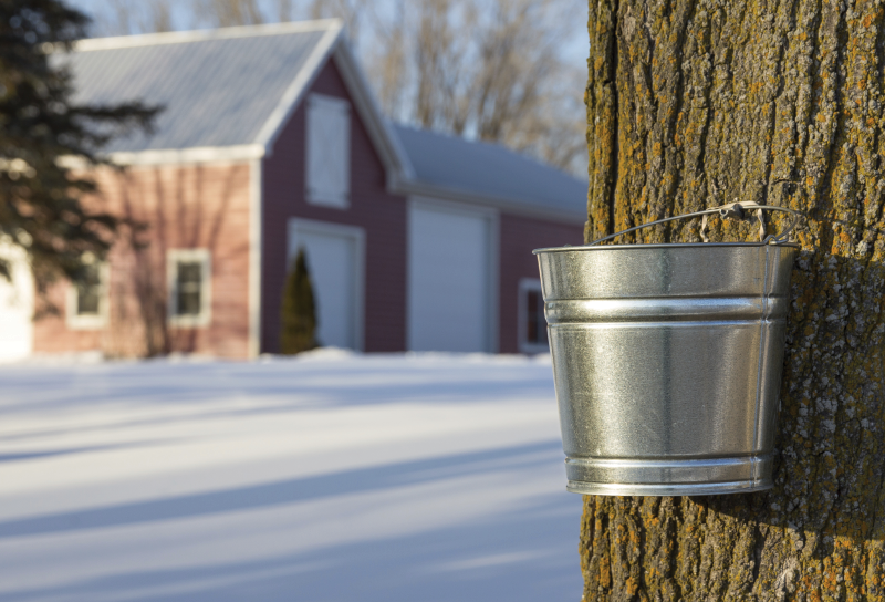 Syrup tapping bucket
