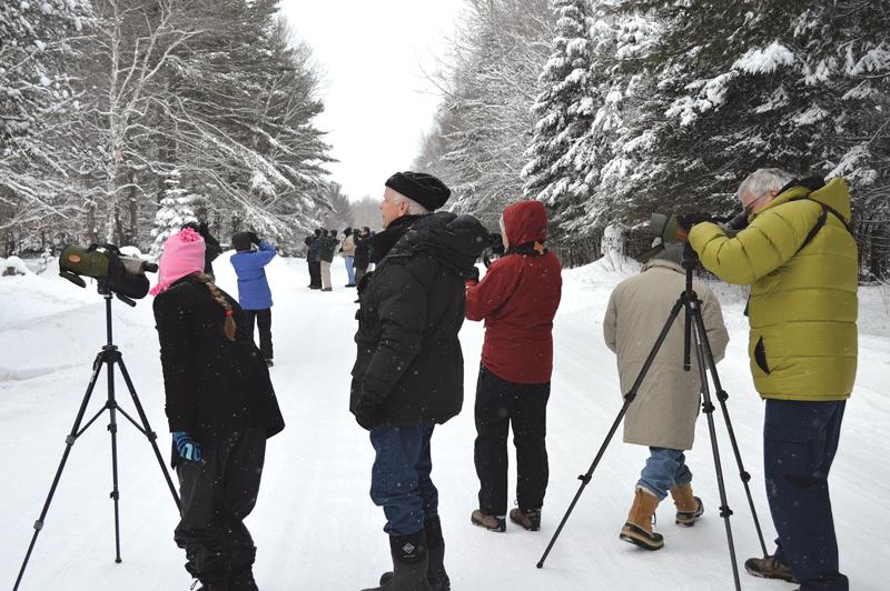 Winter Birding Tours MI Audubon Society