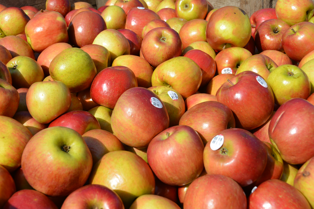 Apple at Yates