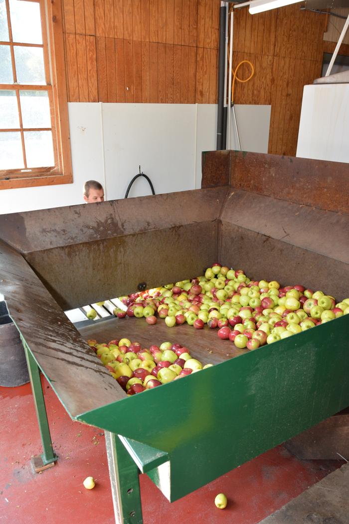 Apple sorting at Yates