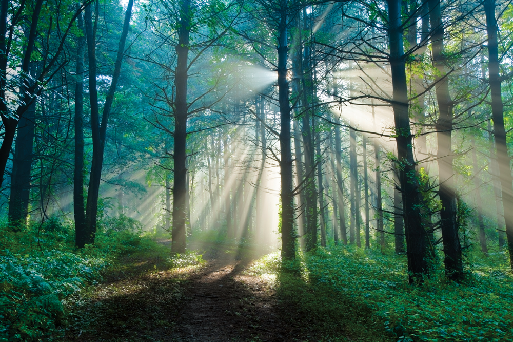Photo of the morning woods by Dwight Nadig