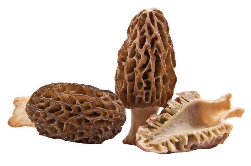 National Morel Mushroom Festival