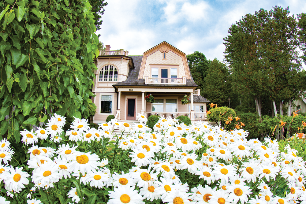 Daisies wave in the breeze at Restmore Cottage on the East Bluff.